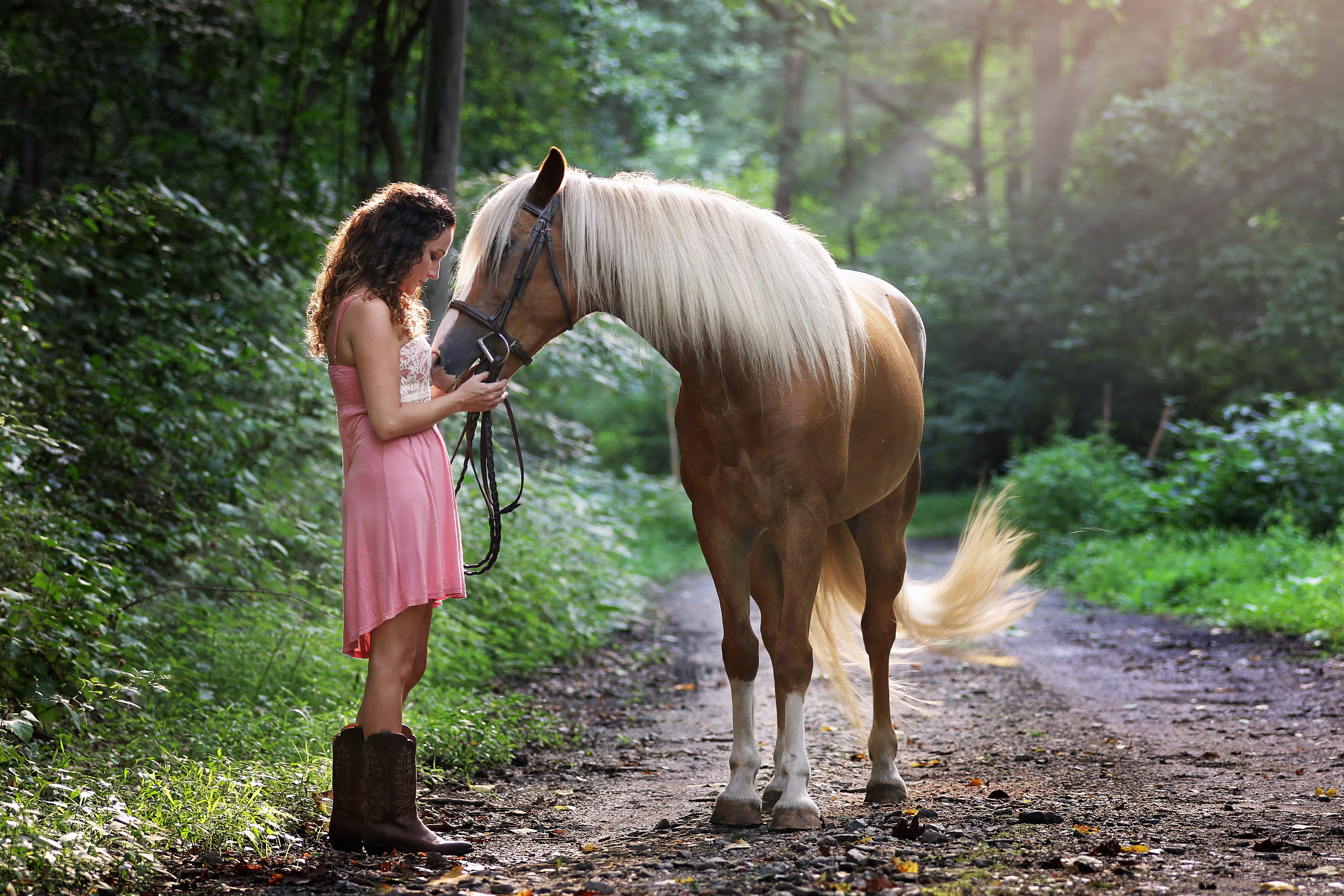 beautiful-daylight-equestrian-1090408
